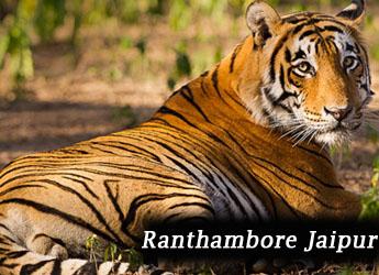 Jaipur ranthambore taxi